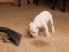 cute-dog-investigating-vacuum-cleaner
