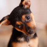 I Have Pets – Should I Get a Different Furnace Filter?