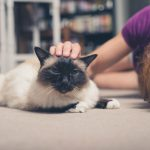 Simple Tips to Keep Your Carpets Pet Hair Free